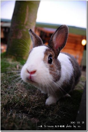 20100225_rabbit (1)