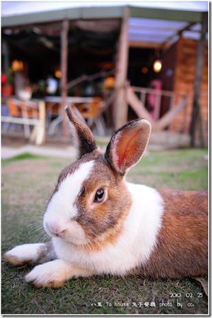 20100225_rabbit (2)