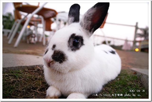 20100225_rabbit (3)