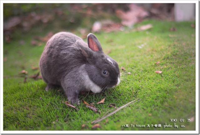 20100225_rabbit (5)