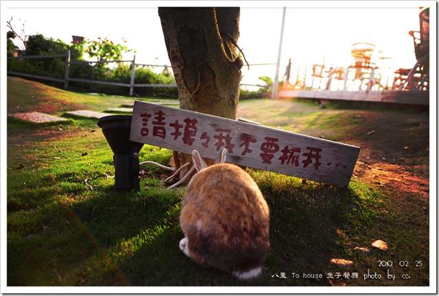 20100225_rabbit (6)