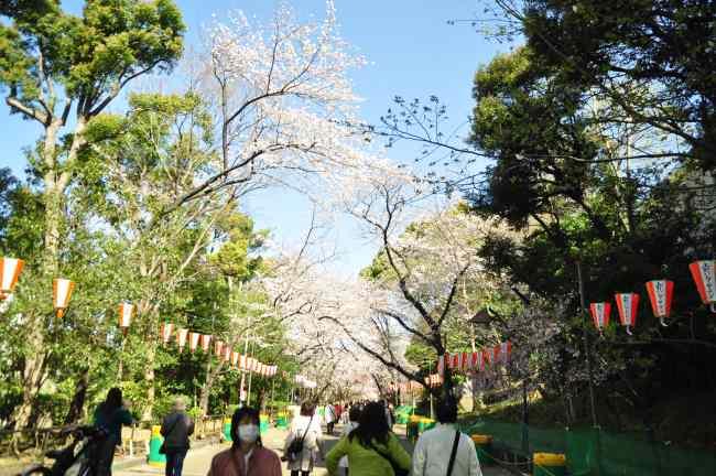 2013.03.21 淺草-上野-銀座-台場 (128).JPG