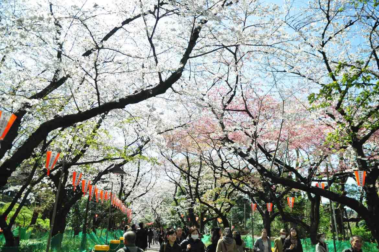 2013.03.21 淺草-上野-銀座-台場 (143).JPG