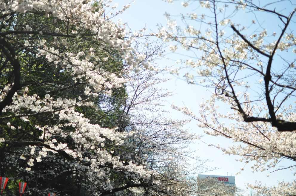 2013.03.21 淺草-上野-銀座-台場 (177).JPG