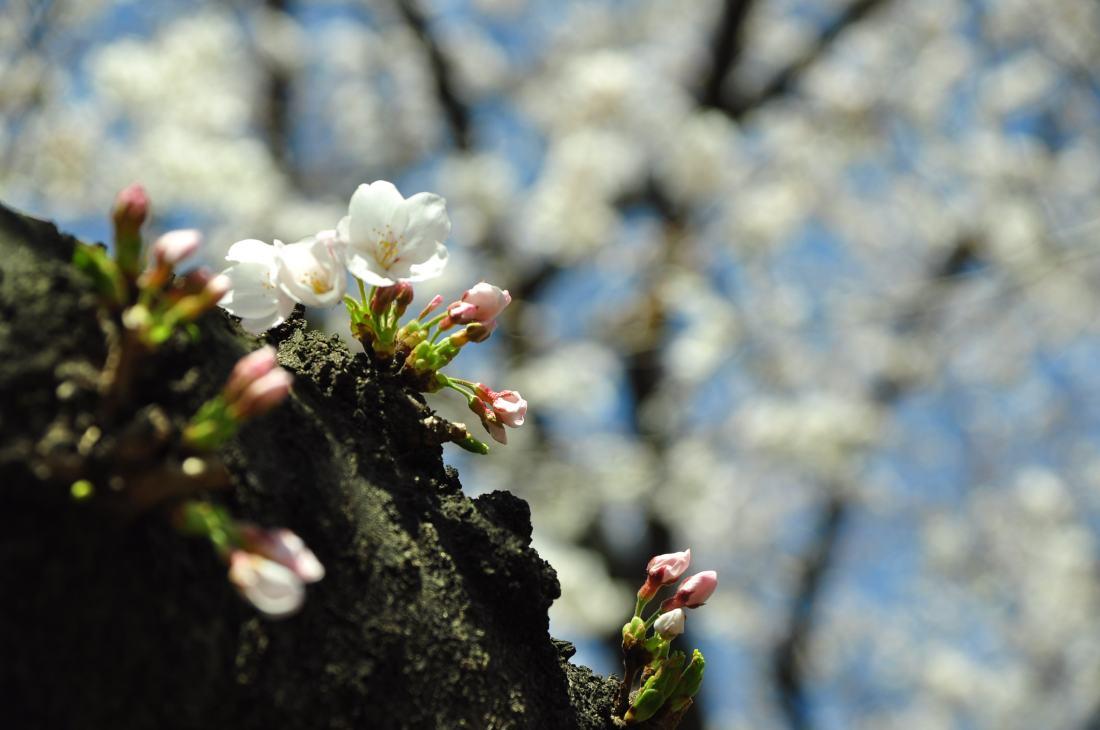 2013.03.21 淺草-上野-銀座-台場 (222).JPG