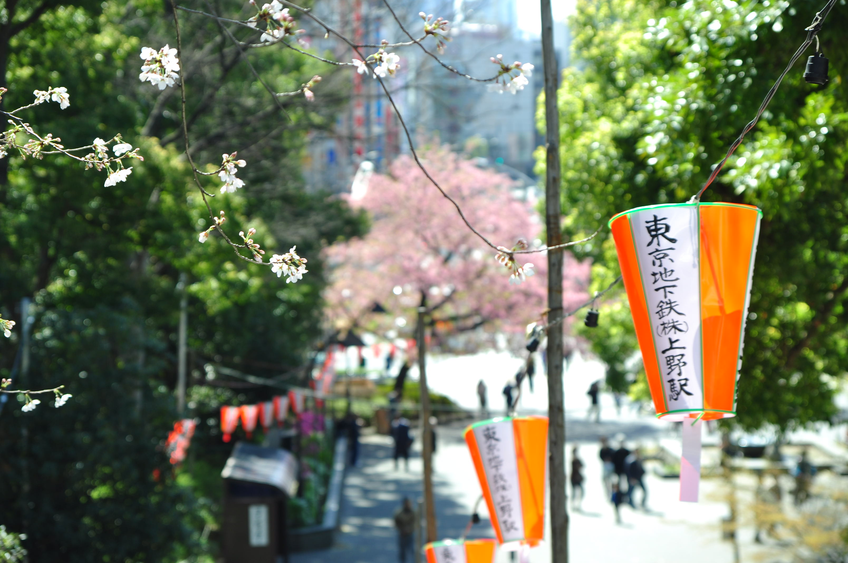 2013.03.21 淺草-上野-銀座-台場 (258).JPG