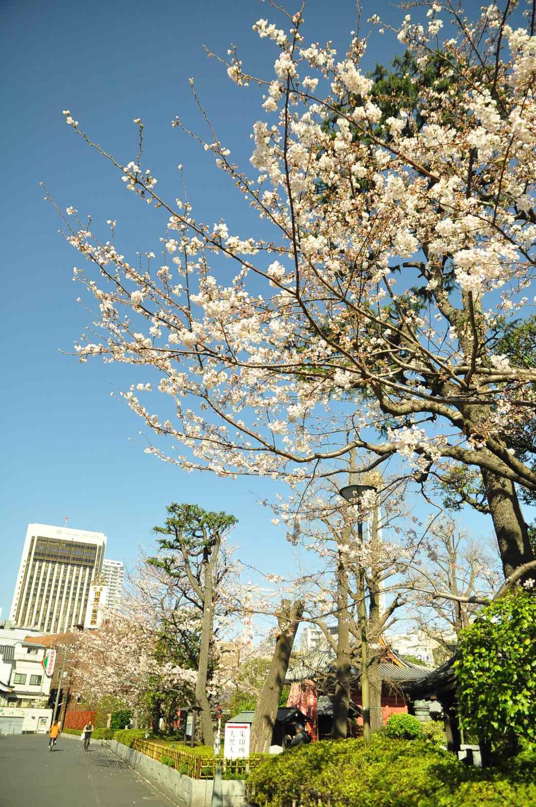 2013.03.21 淺草-上野-銀座-台場 (74).JPG